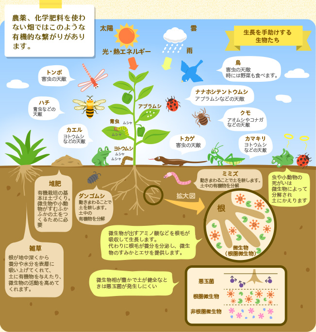 有機サイクルと生物多様性