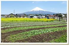 富士山の恵みファーム