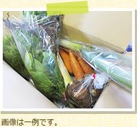 野菜Lセット 定期便