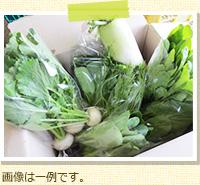 野菜Mセット 定期便