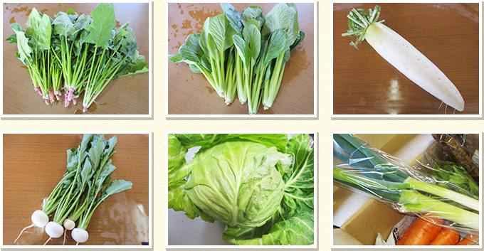野菜の量例 Mセット6品の量